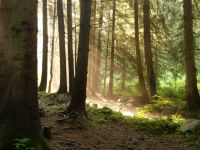 letné ráno v prebúdzajúcom sa lese