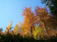 my dva a podzim.......